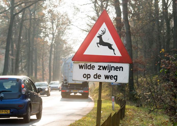 De N310 tussen Nunspeet en Elspeet is een hotspot voor wildaanrijdingen. Er wordt daarom nagedacht over maatregelen om het aantal ongevallen terug te dringen.