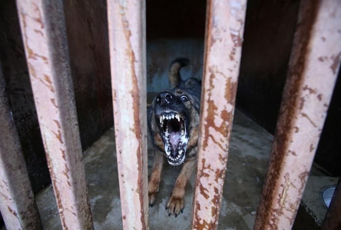 Een waakhond doet zijn werk in een kooi in de Verboden Stad in het Chinese Beijing. Foto Jason Lee