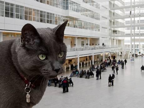 'IJspaleis moet stadhuiskat Richard de Derde krijgen'