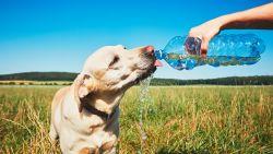 """""""We houden onze adem in bij dit weer"""": dierenarts geeft tips om je huisdieren te beschermen tegen de hitte"""