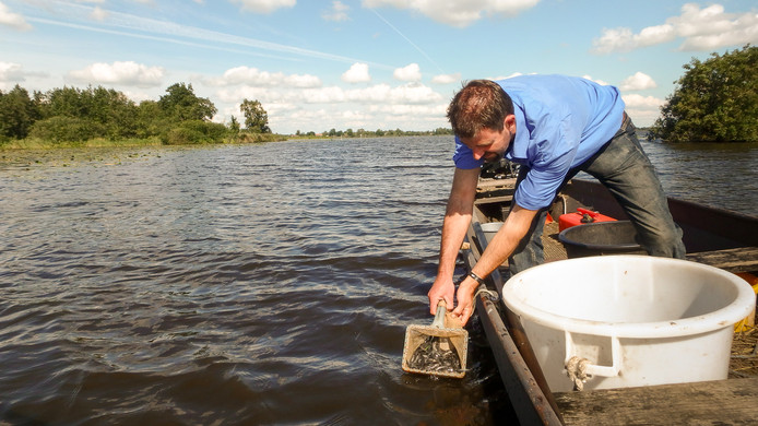 Beroepsvisser Stefan Lok zet paling uit. Archieffoto