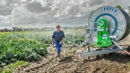 """Boeren besproeien akkers met gezuiverd afvalwater van diepvriesgroentenbedrijf Ardo: """"Vroeger werd al dat water gewoon in de beek geloosd"""""""