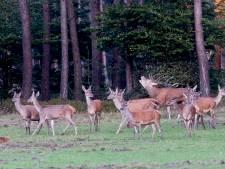 Ontwerp wildscherm Hoog Buurlo met uitleg over Veluwse bodem