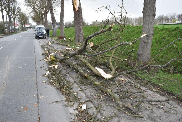 De zware tak brak af onder de felle windstoten.