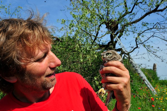 Voorzitter Ton Stokwielder van Stichting Wereldboom brengt een steenuil naar een nest bij het Drongelens kanaal in Waalwijk. (archieffoto)
