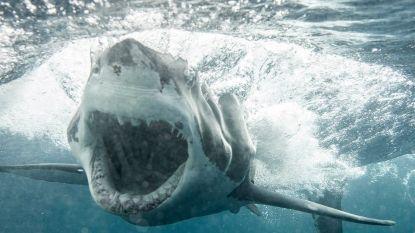 'Jaws' ooit van zó dichtbij gezien?