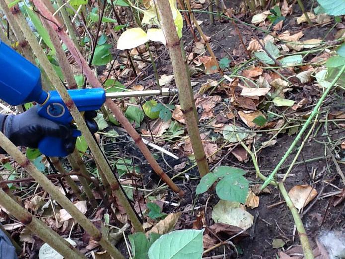 Toepassing van glyfosaat in de tuin.