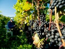 Gelderland telt meeste wijnboeren