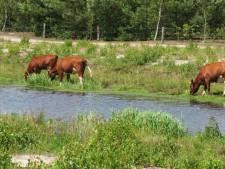 'Dames' zoeken verkoeling en gaan pootje baden in Bornerbroek