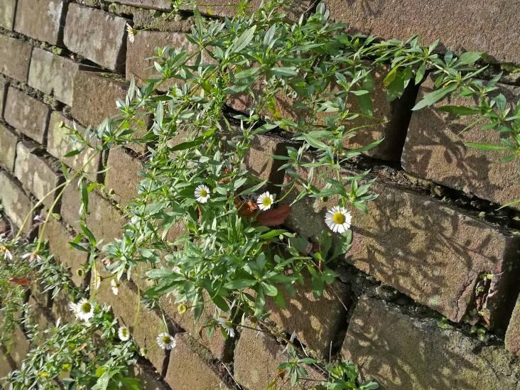 Warmteminnend groen: steeds meer nieuwe plantensoorten in de stad