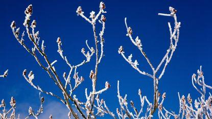 Koudegolf voorbij: temperaturen komende week boven het vriespunt