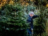 Vraag naar boomlange kerstbomen groter dan ooit