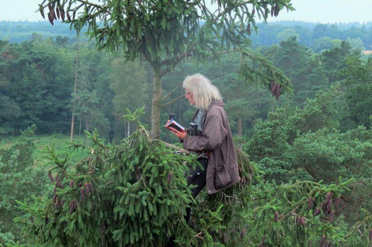 Roofvogelonderzoeker Bijlsma, die bij voorkeur vanuit een boomtop werk, noteert de vogels die hij ziet.  Beeld Rob Buiter