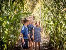 Niet voor watjes, het maisdoolhof in Reusel