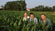 Wat als... je nog eens in het maïsveld kon spelen?