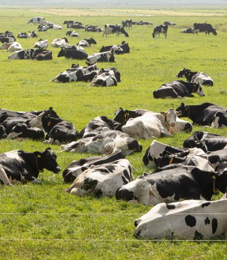 Hittestress bij koeien, leg koelelementen in het konijnenhok