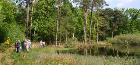 Bosbrand bij Landgoed Venrode in Boxtel door kampvuur, twee jongens opgepakt
