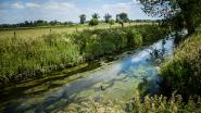 Vlaanderen investeert voor 27 jaar in biodiversiteit en klimaat in de Getevallei