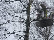 Kat met hoogtevrees valt bij reddingspoging uit Deventer boom