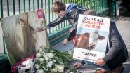 Zaakvoerder slachthuis Verbist moet zich verantwoorden voor dierenmishandeling