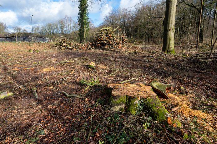 Het gekapte stuk bos. Op de achtergrond de oude manege.
