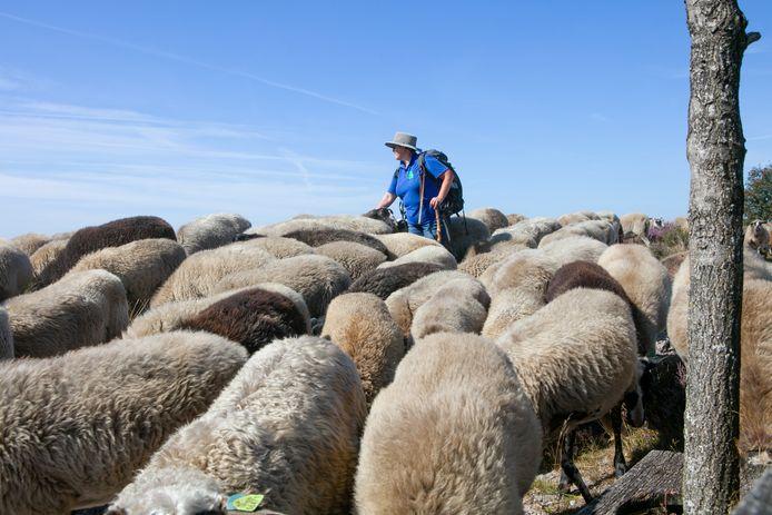 Volgens José Dood is de kudde 'goed voor de biodiversiteit'.