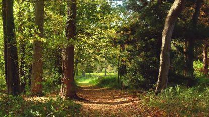 Dronebeelden van het Zoniënwoud tonen prachtige herfstkleuren
