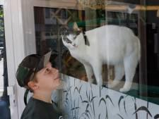 Kater Tobias vermaakt het Nijmeegse publiek vanachter het raam: 'Eigenlijk is hij bang'