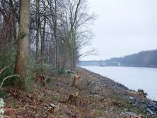 Ontzetting over 'noodzakelijke' kaalslag langs Maas-Waalkanaal: 'Nu zie je allemaal afgezaagde boomstompjes'