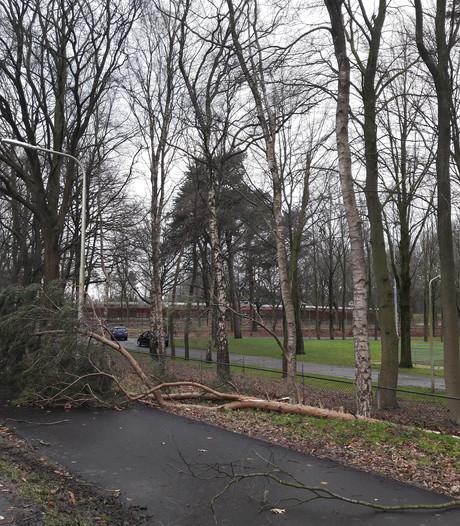 Tientallen bomen om: Mooksebaan, Heumensebaan dicht
