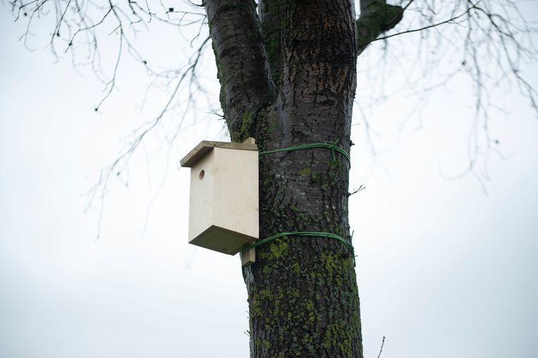 De eerste nestkastjes werden dinsdag opgehangen.
