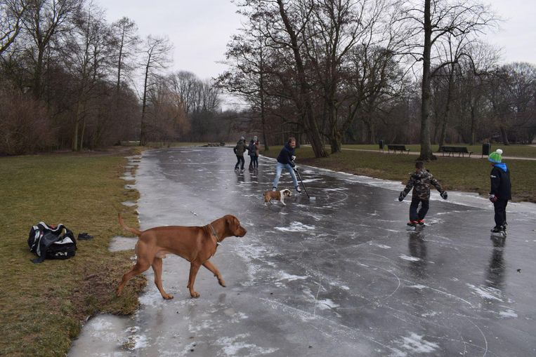 Deze honden houden ook wel van een beetje ijs Beeld Floris van Raaijen