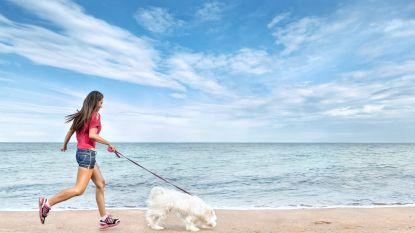 Naar de kust tegen longkanker? Zeelucht inademen remt schadelijk gen af