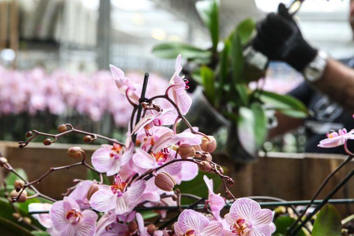 Sinds de corona-uitbraak verdwijnen veel planten in de container.