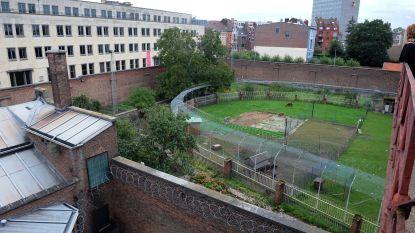 Minderjarigen gooien pakjes drugs over muur van hulpgevangenis Leuven