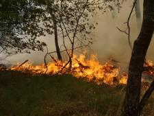 Grote natuurbrand op Loonse en Drunense Duinen: 'Blijf weg'