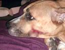 Zena raakte bij de overval gewond aan haar kop
