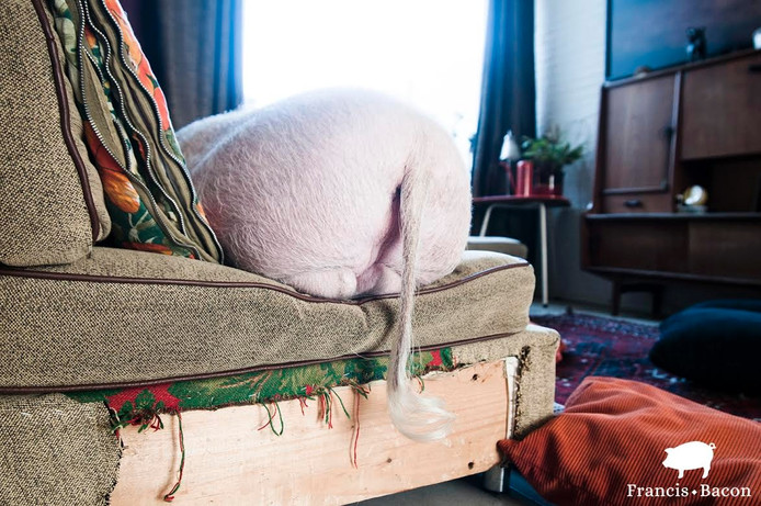 Francis 'luxepaardje' Bacon. Foto Kim Pattiruhu