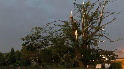 Storm richt vooral schade aan aan daken en bomen, vrouw lichtgewond doordat tak op auto valt
