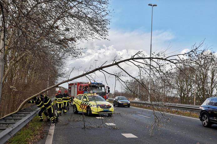 Een boom op de A58 en A65 zorgt voor hinder op de weg.