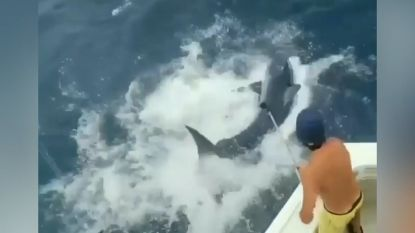 Vissers schrikken wanneer haai bijna op hun boot landt