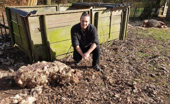 Jan Loos van Landschap vzw bij de gedode schapen.