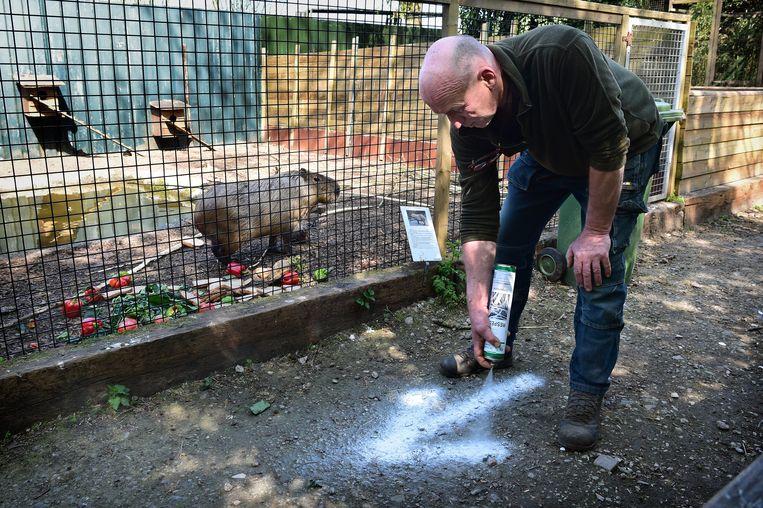 Eigenaar Roger van Leeuwen van Uilen- en dierenpark De Paay geeft eenrichtingsverkeer aan op de smalle paden. Beeld Marcel van den Bergh