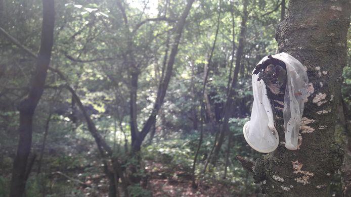 Een condoom in een boom op een homo-ontmoetingsplaats in Zuidoost-Brabant.