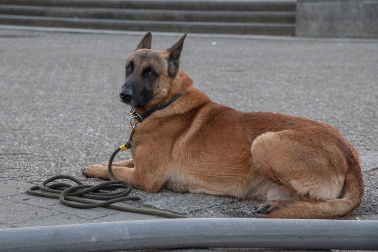 De politie liet voor alle zekerheid een explosievenhond aanrukken zaterdagnacht.