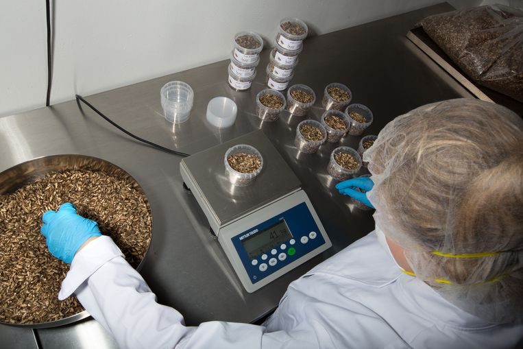 De insectenbranche groeit hard. De Nederlandse fabriek Kreca produceert al duizenden kilo's wormen per dag. Beeld Hollandse Hoogte / Najib Nafid