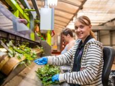 Waarom veel scholieren nu wél hun handen vuil maken bij kwekers