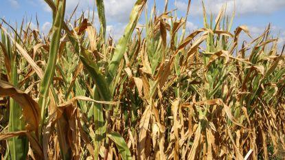 Land- en tuinbouwers dienen 141 schadedossiers in