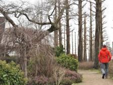 Struinen door de tuinen van Boskoop: veel (Japanse) natuur, geschiedenis én koffie