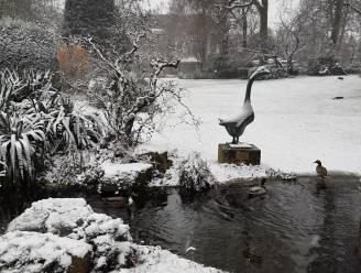 Winterprik strooit paar centimeter sneeuw in Antwerpen (maar zondag dooide het alweer)
